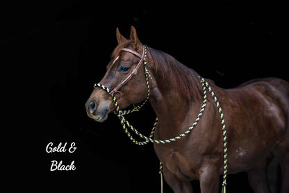 Gold & Black with Weaver headstall