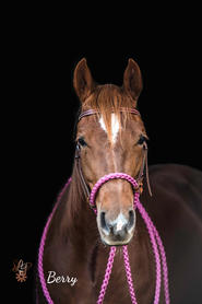 Berry with Dark Brown headstall