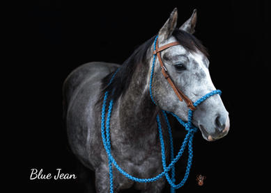 Blue Jean with Light Brown headstall