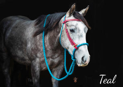 Teal with Oxblood headstall