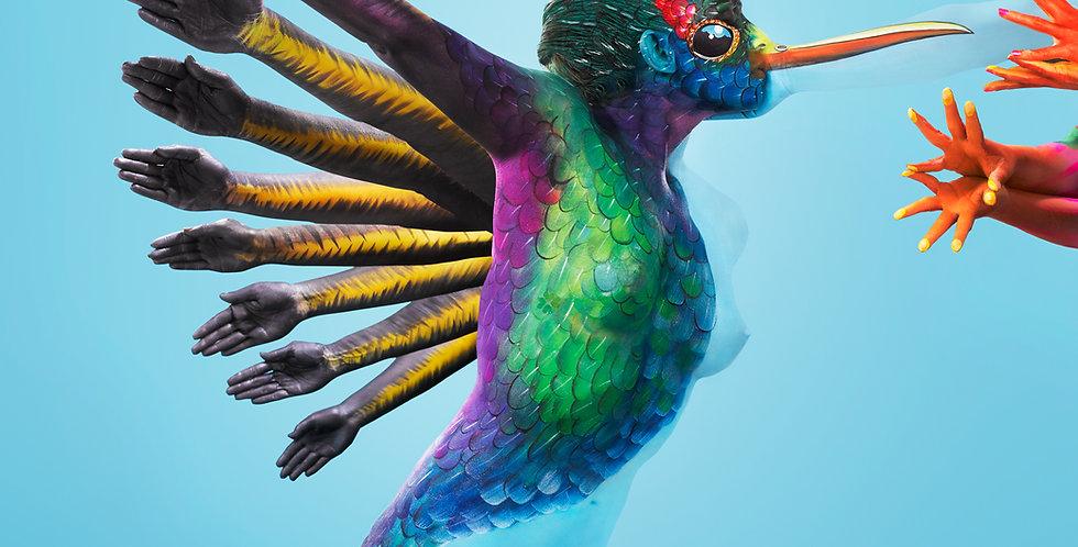 'Infatuation' Hummingbird