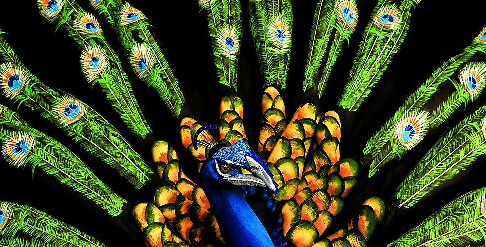'Flaunt' Peacock