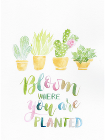 Bloom where you're planted cactus Print