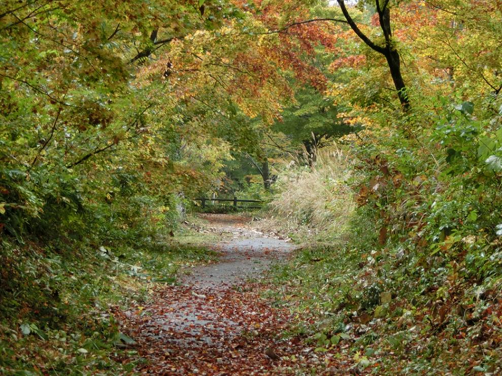恋人岬への道