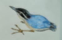 blue bird_o.png