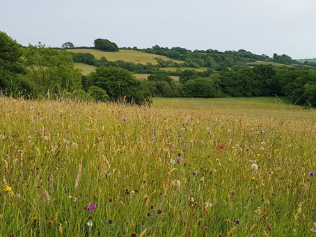 Establishing a wildflower meadow