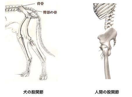 股関節の重要性