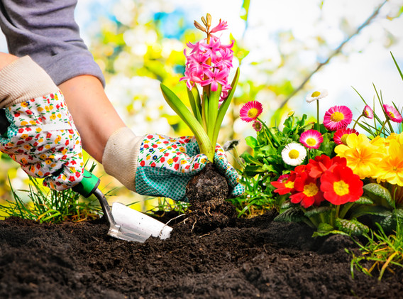 Flower planting and Flower bed prep.