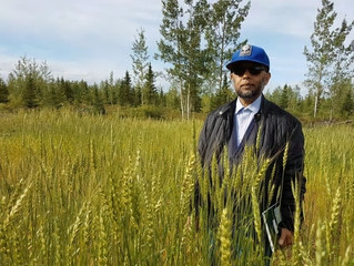 Improving crop productivity in central Labrador's sandy soil with charcoal