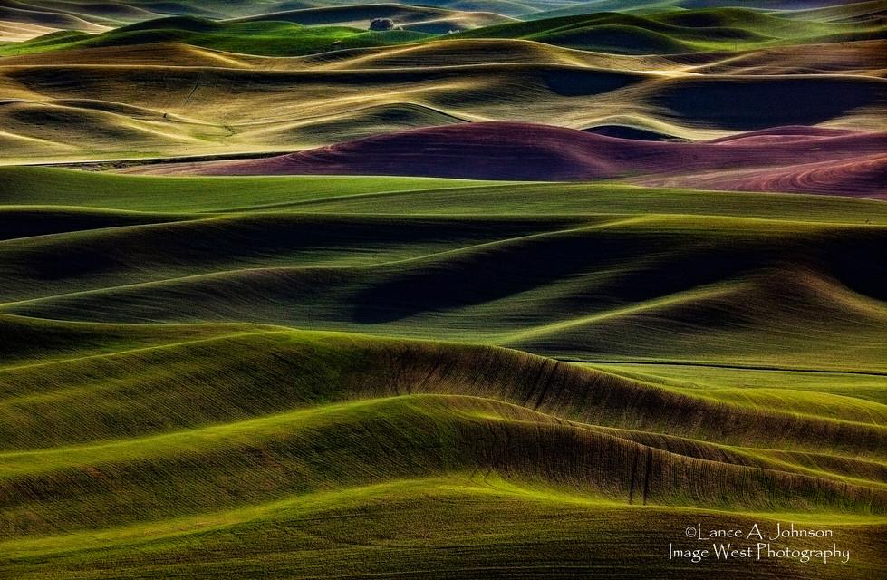 Palouse Farmland, Steptoe Butte, WA.jpg