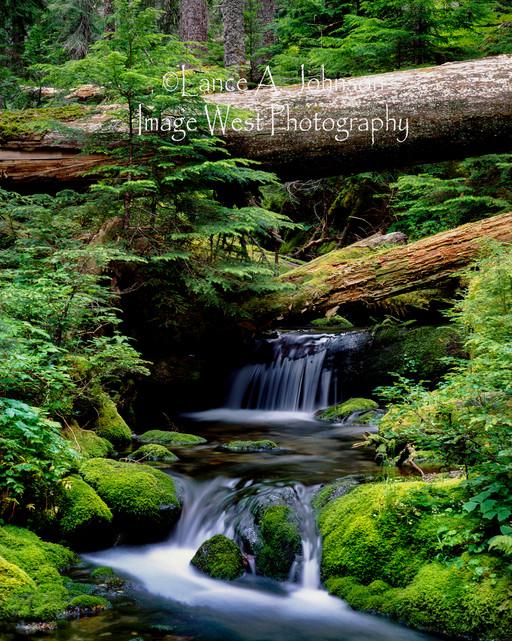 Summerland Trail Mt Rainier National Par