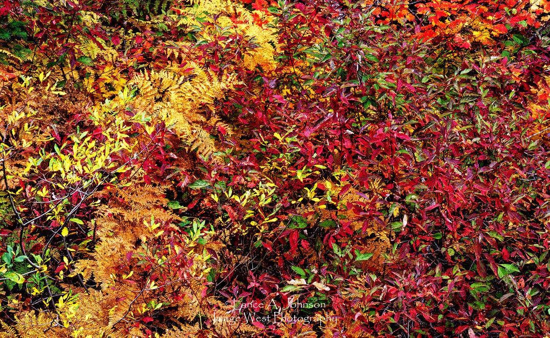 Autumn Abstract, Snoqualmie Pass, WA.jpg