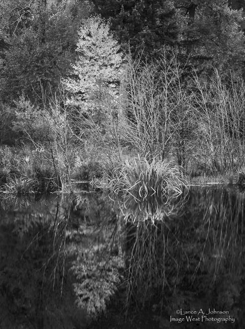 Beaver Pond, Chinook Pass, WA.jpg