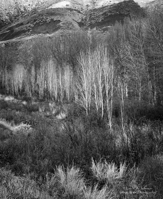 Early Spring in  Yakima Canyonbw.jpg