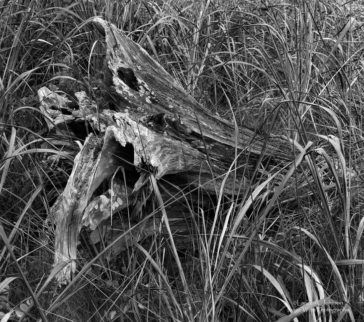 Nature's Scuplture near Deception Pass,