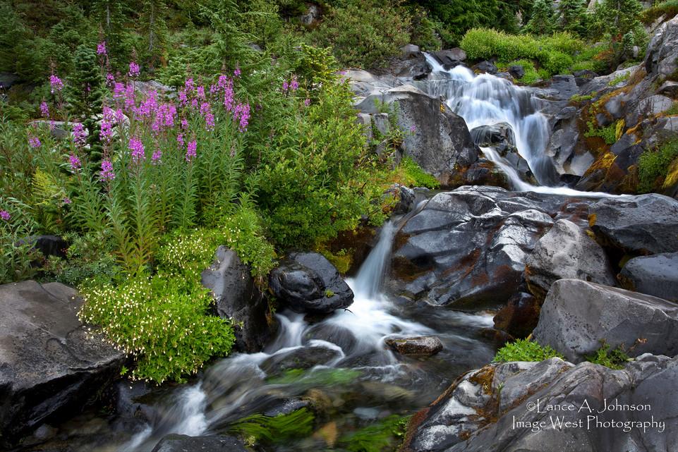 Upper Paradise River, Mt Rainier Nationa