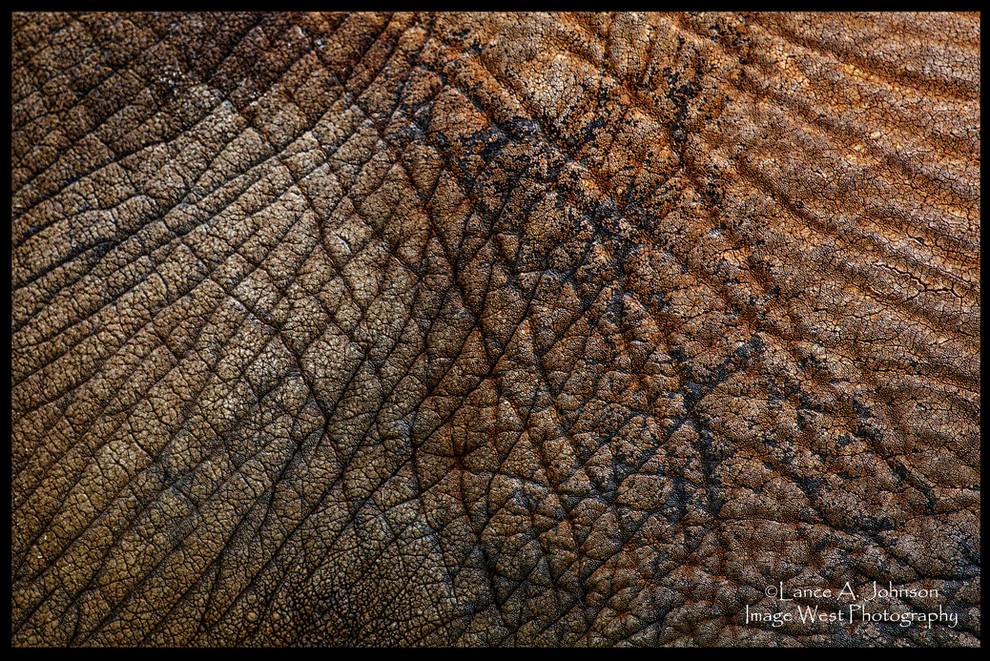 IMG_1266 Elephant Skin, Louisville Zoo.j