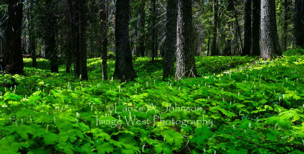 Wenatchee National Forest, WA.jpg