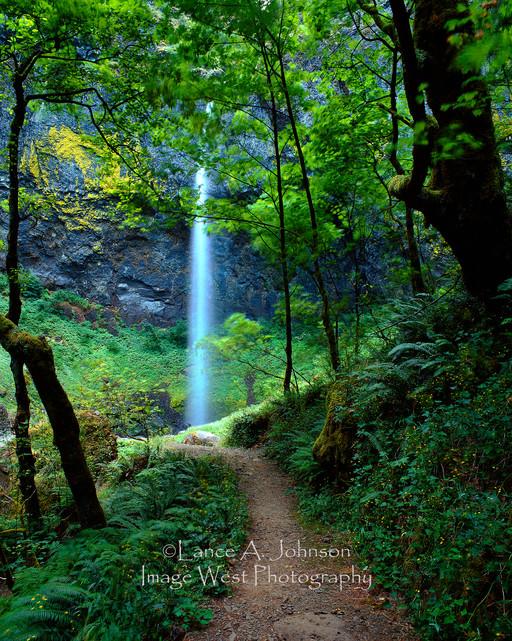 Pathway to Waterfall.jpg