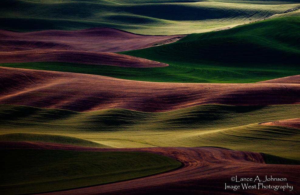 Palouse Farm Land from Steptoe Butte, WA