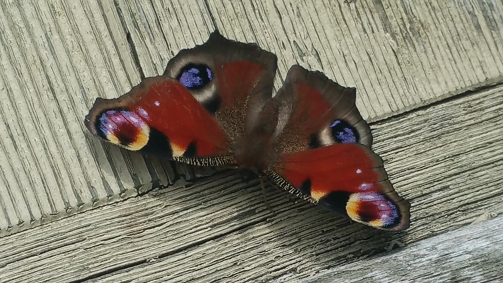 Cotswolds Guided Tours | Butterflies