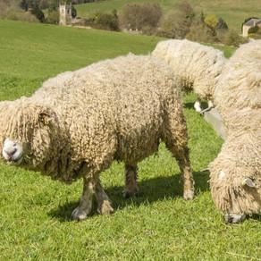Cotswolds Farm Animals