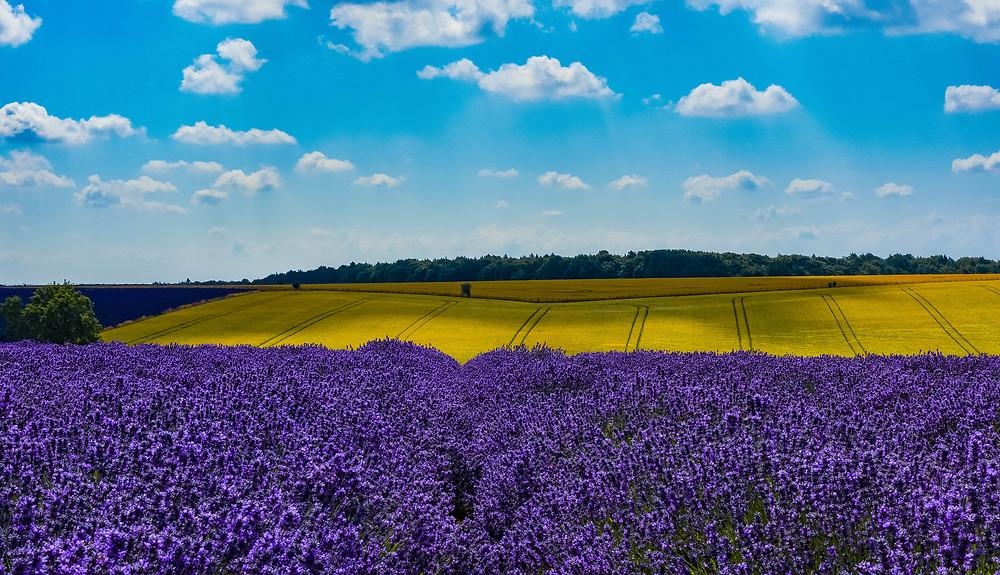 Cotswolds Guided Tours | Cotswolds Lavender Farm