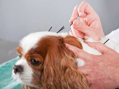 That Time You Were Poked -- My dog got acupuncture, but I was the real patient