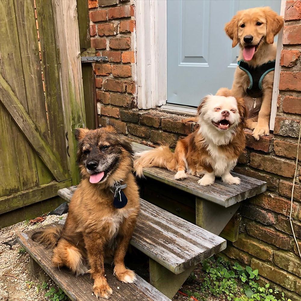 Dog pack, Annie D. Stutley