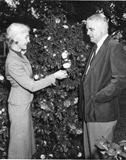 Annie D. Stutley That Time You Blog camellias