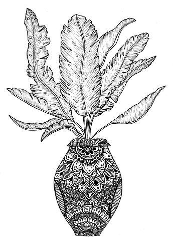 pot plant web.jpg