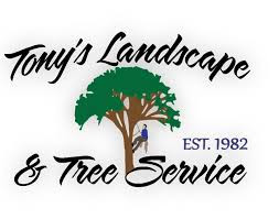 Business of the week: Tony's Landscape & Tree Service