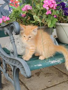 RFA kitten.jpg