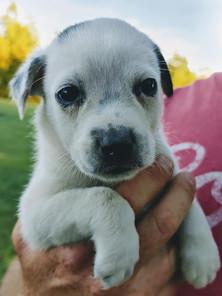 RFA puppy.jpg