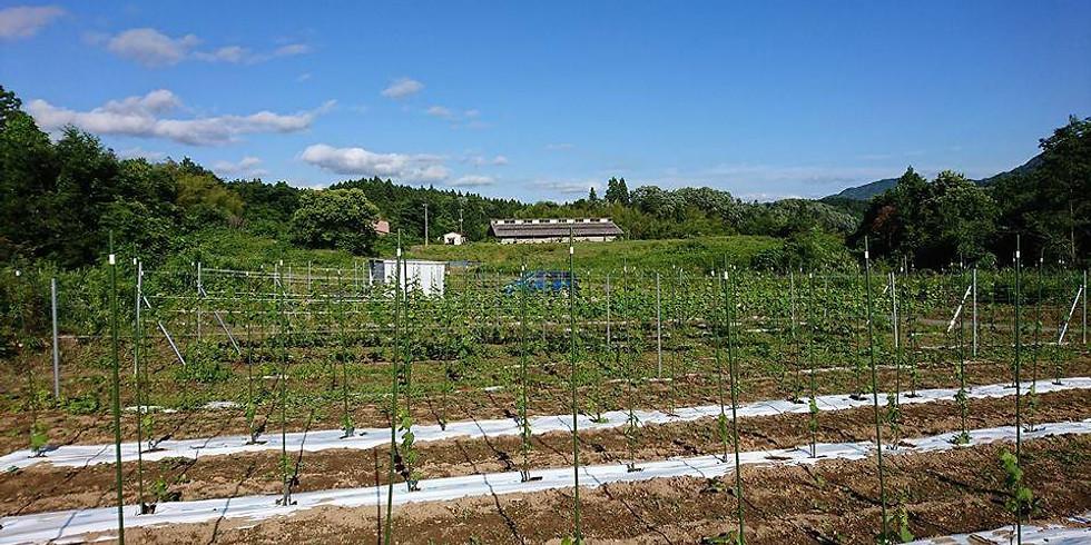 【たんぼゼミ】福光葡萄畑ブルーベリー収穫と新庄夜市、里山らくらくサイクリング