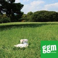 【ggm】布ナプキンちくちくワークショップ