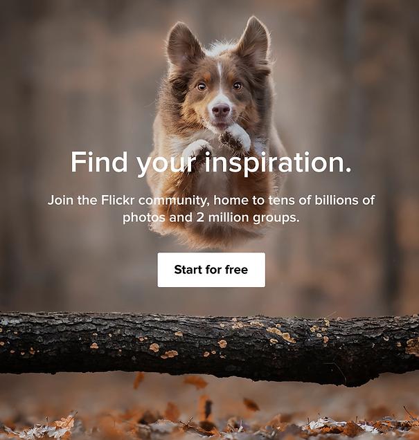 Flickr website review