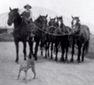 Cokeville | Wyoming | workhorses