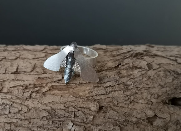 Nattfly ring