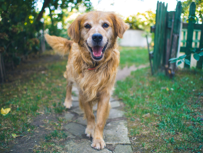 Dogs: The Key to Happiness?