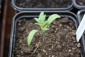 Plants bio potager et maraicher