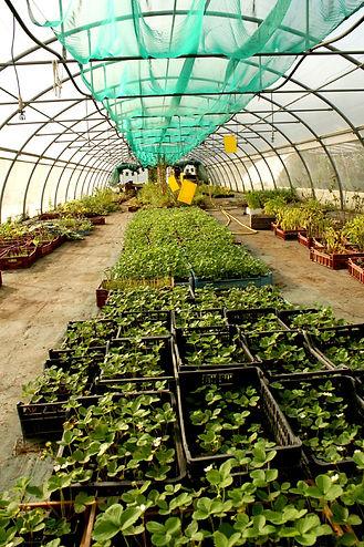 Plants bio potager