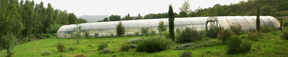 Plants bio Demeter (herault - 34)