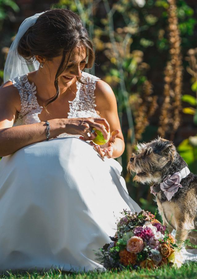 bride dog.jpg