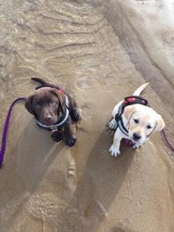 Pups Beach 2