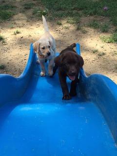 Pups Slide