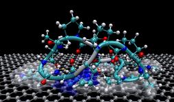 Peptide on graphene.png