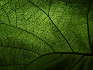 green-4719686_1920.jpg