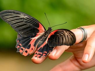 butterfly-5078980_1920.jpg