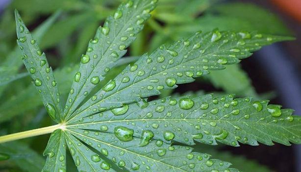 leaf with drops _edited.jpg